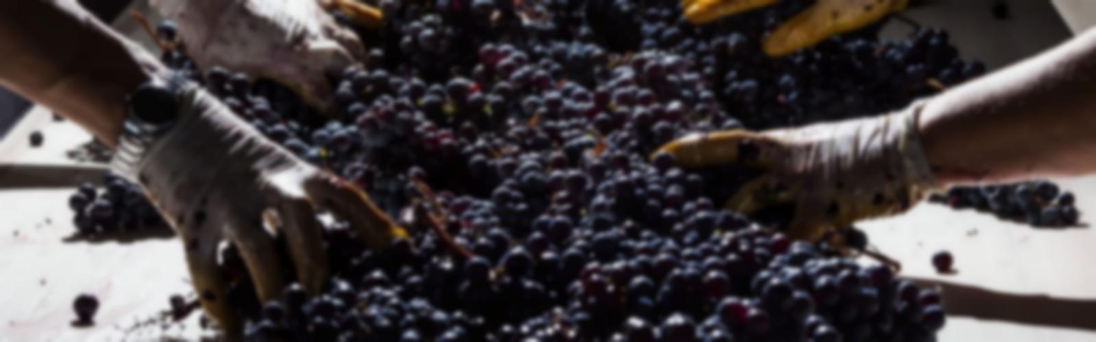 vin1600500flou